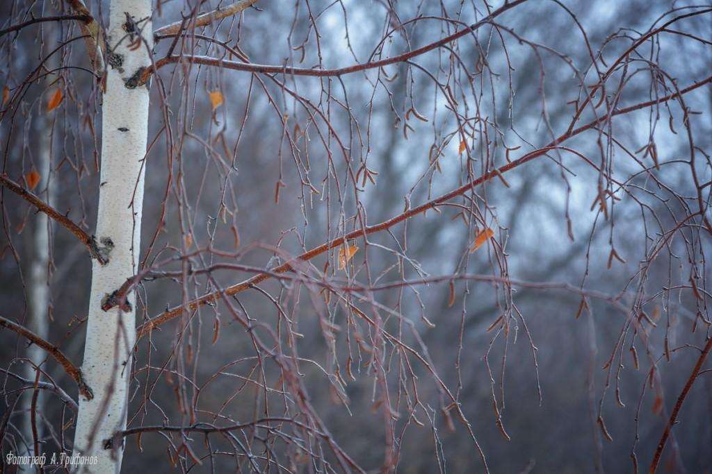 Тропинка в городском парке туманным утром. Муром, февраль 2019 05