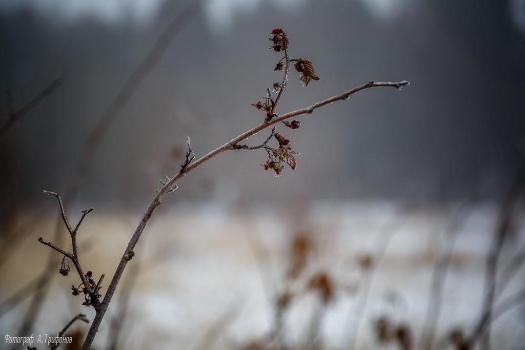 Тропинка в городском парке туманным утром. Муром, февраль 2019 07