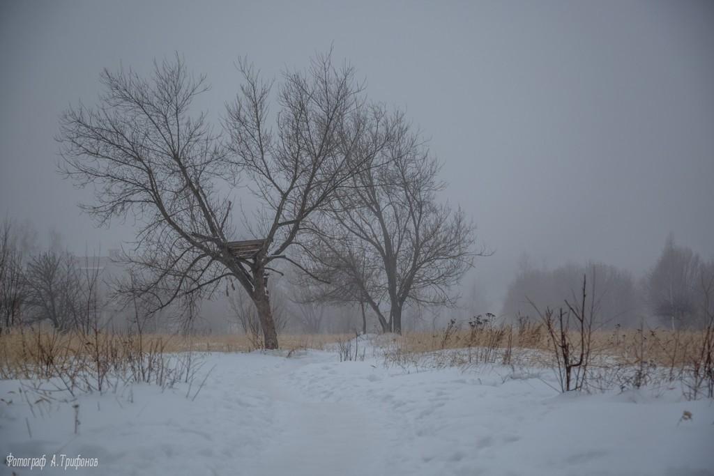 Тропинка в городском парке туманным утром. Муром, февраль 2019 08