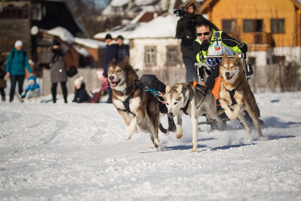 2019_02_23 Суздаль - гонки на собаках 01