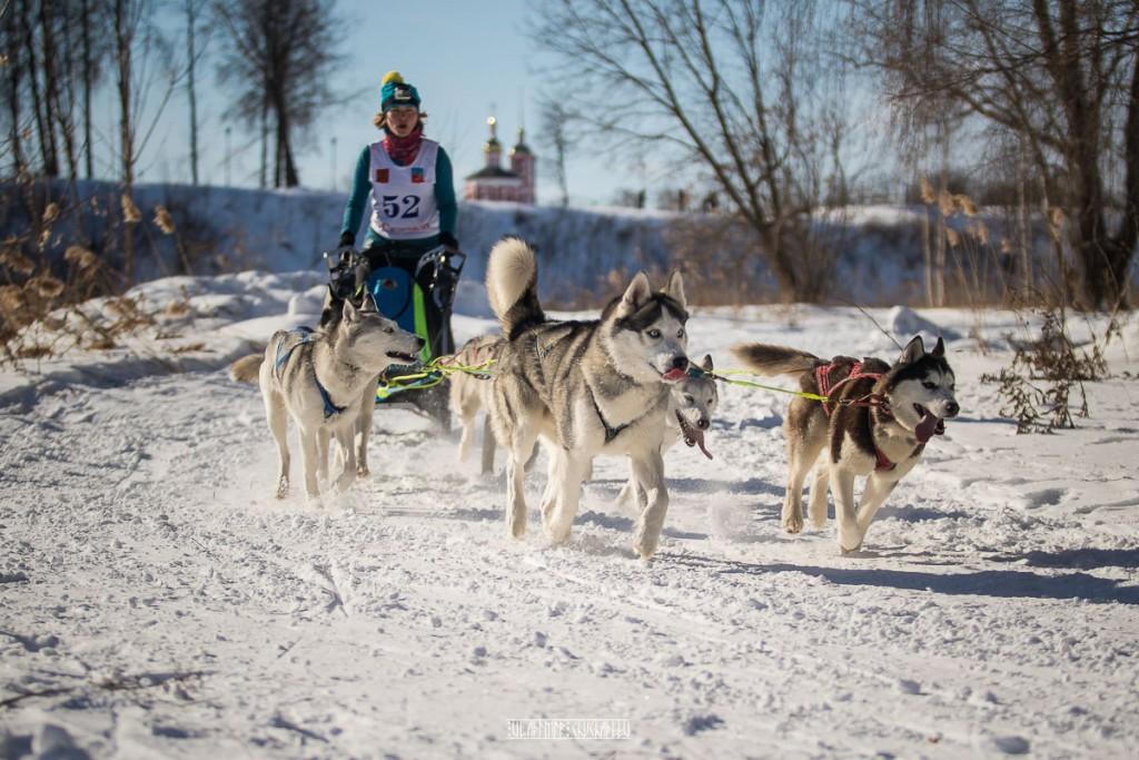 2019_02_23 Суздаль - гонки на собаках 02