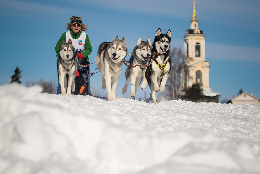 2019_02_23 Суздаль - гонки на собаках 03