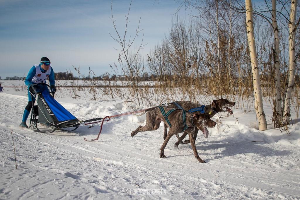 2019_02_23 Суздаль - гонки на собаках 04