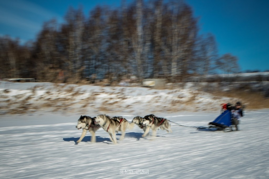 2019_02_23 Суздаль - гонки на собаках 05
