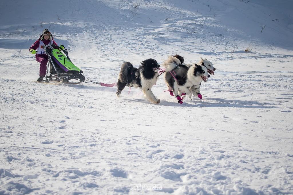 2019_02_23 Суздаль - гонки на собаках 06