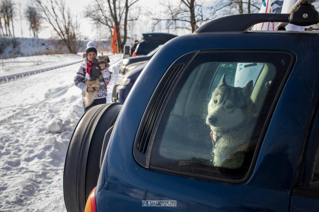 2019_02_23 Суздаль - гонки на собаках 09