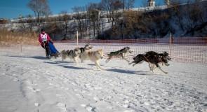 2019_02_23 Суздаль — гонки на собаках