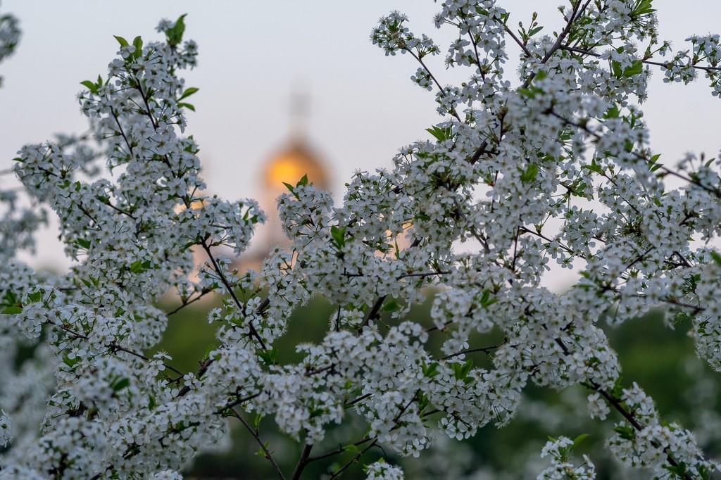 Май цветущий во Владимире 07