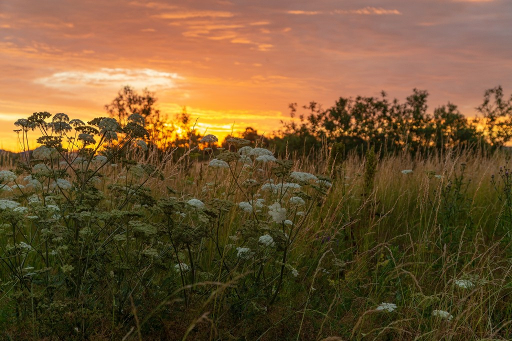 Чудесный, восхитительный рассвет на Покрова-на-Нерли. 04