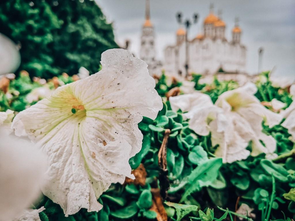 Владимир, июль 2019 03
