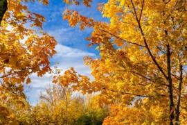 Настоящая осень дарит удивительные ощущения