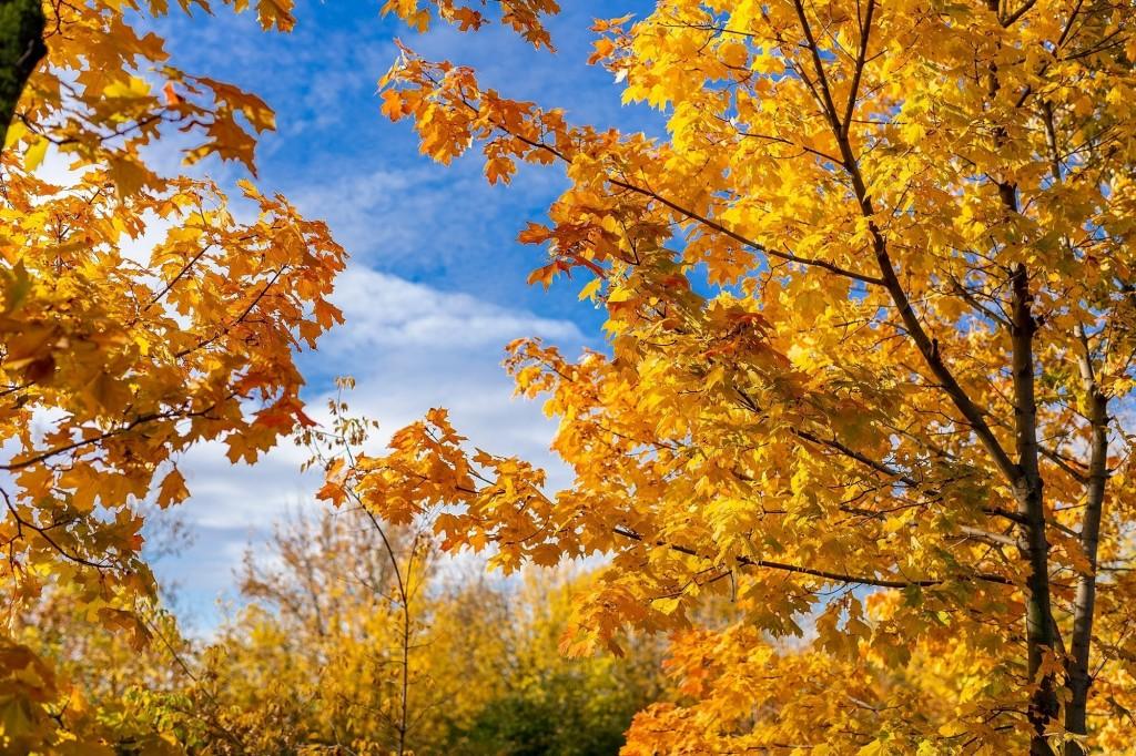 Настоящая осень дарит удивительные ощущения 01
