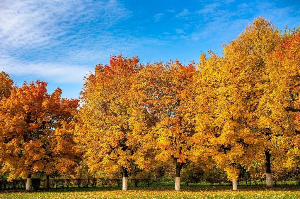 Настоящая осень дарит удивительные ощущения 02