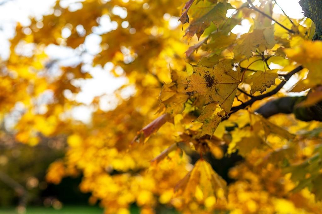 Настоящая осень дарит удивительные ощущения 03