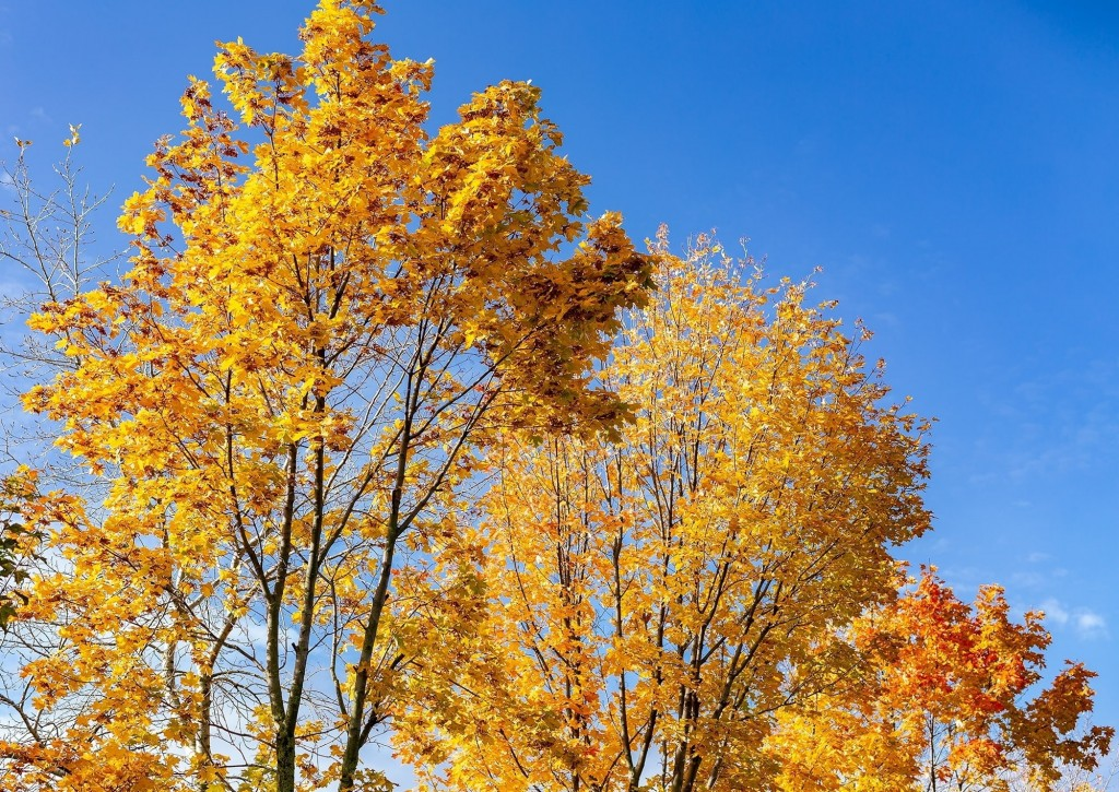 Настоящая осень дарит удивительные ощущения 04