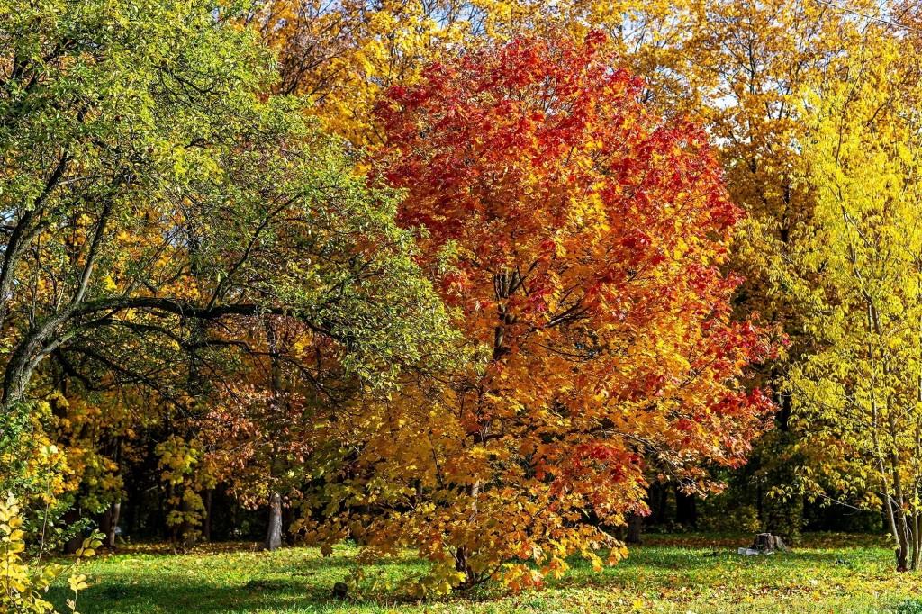 Настоящая осень дарит удивительные ощущения 05