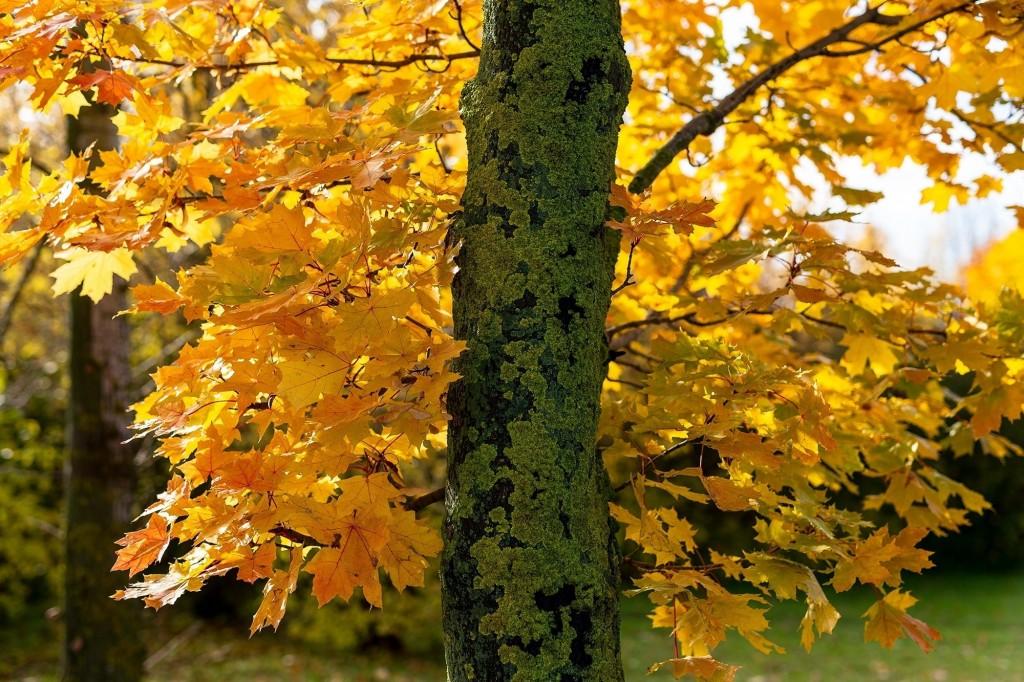 Настоящая осень дарит удивительные ощущения 07