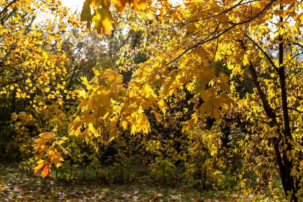Настоящая осень дарит удивительные ощущения 08