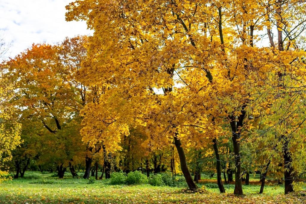 Настоящая осень дарит удивительные ощущения 09