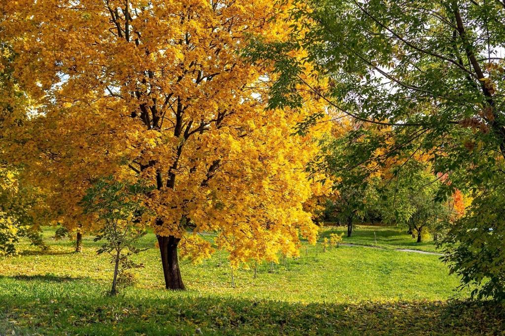 Настоящая осень дарит удивительные ощущения 10