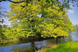 Загородный парк города Владимира летом