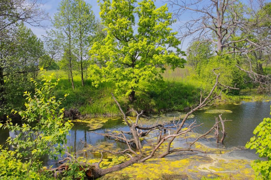 Загородный парк города Владимира летом 02