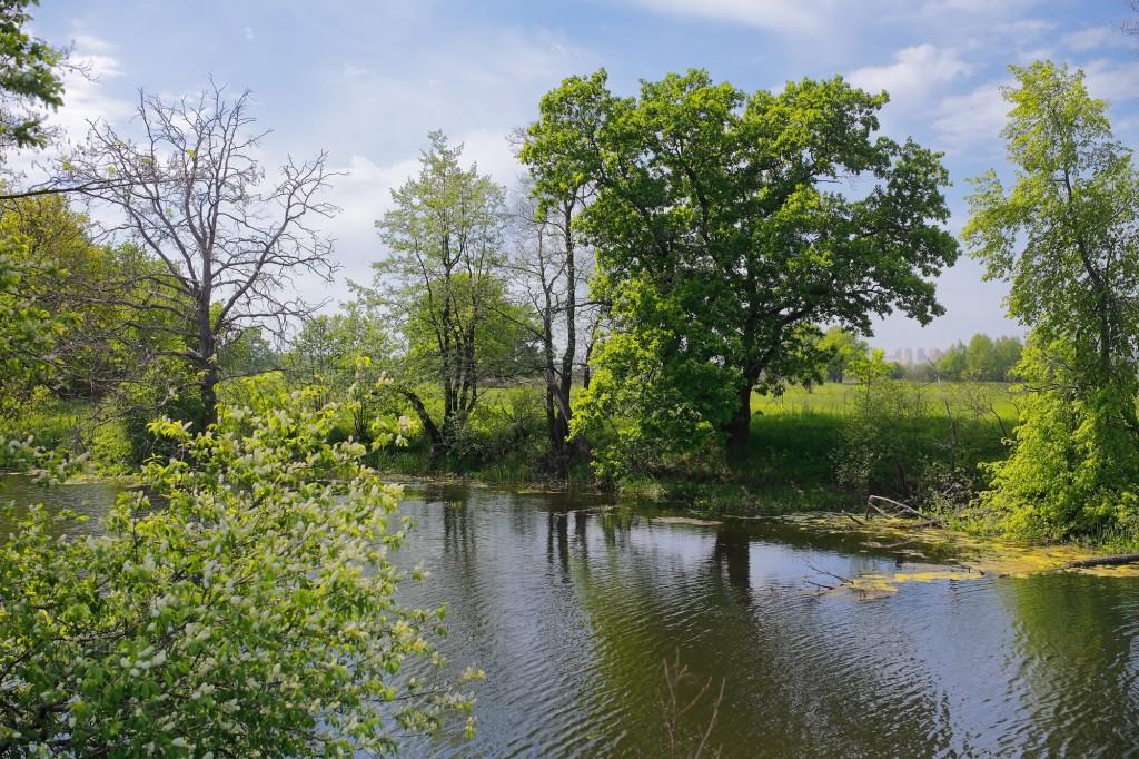 Загородный парк города Владимира летом 03