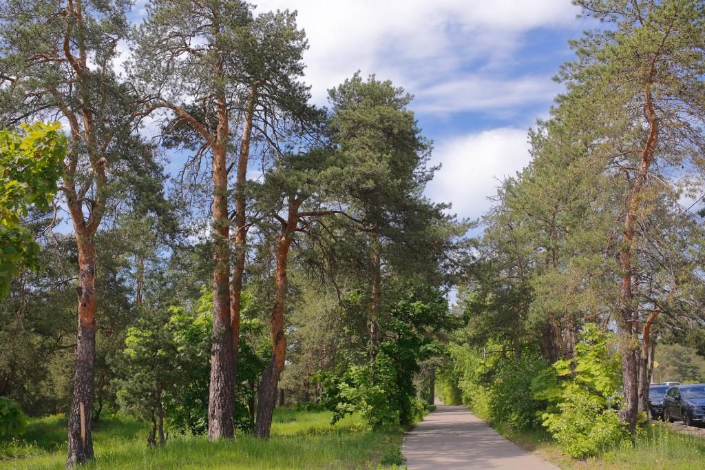 Загородный парк города Владимира летом 05