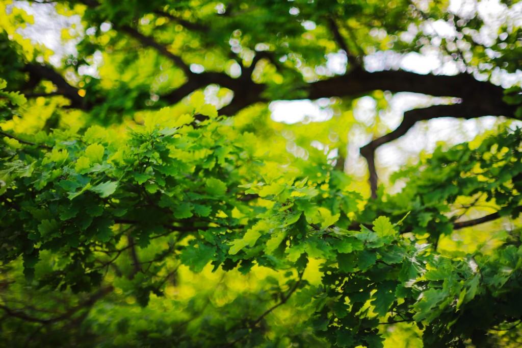Загородный парк города Владимира летом 06
