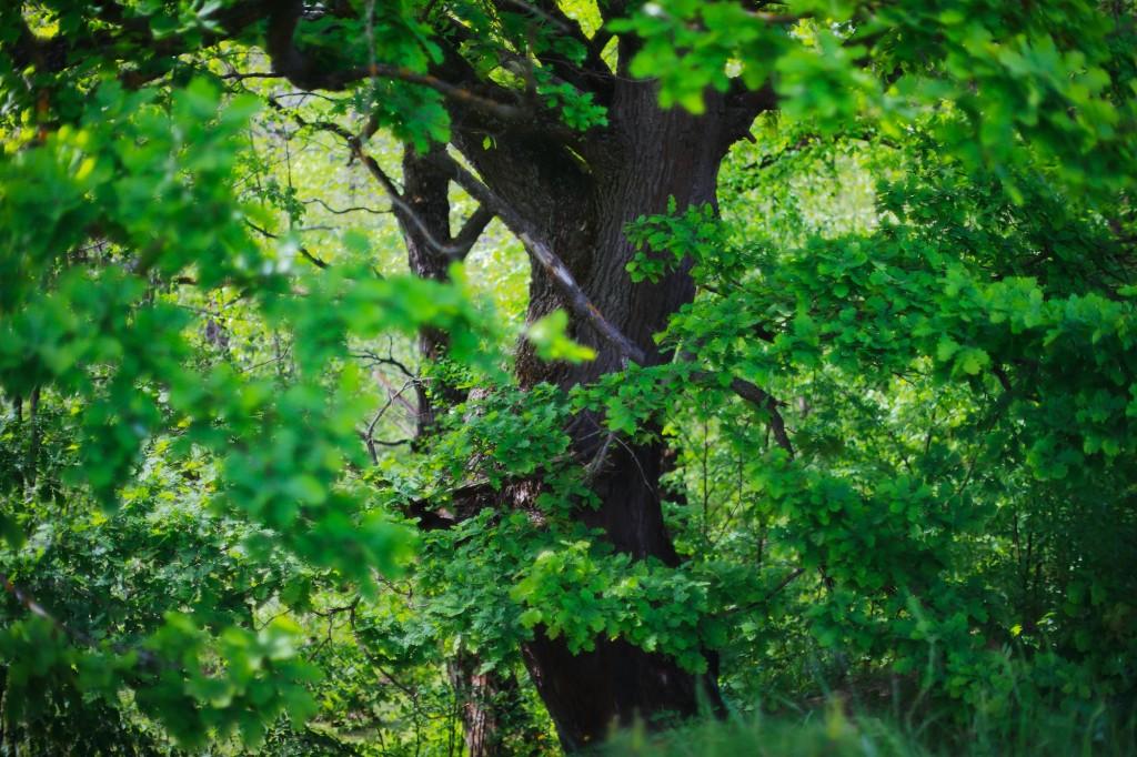 Загородный парк города Владимира летом 08