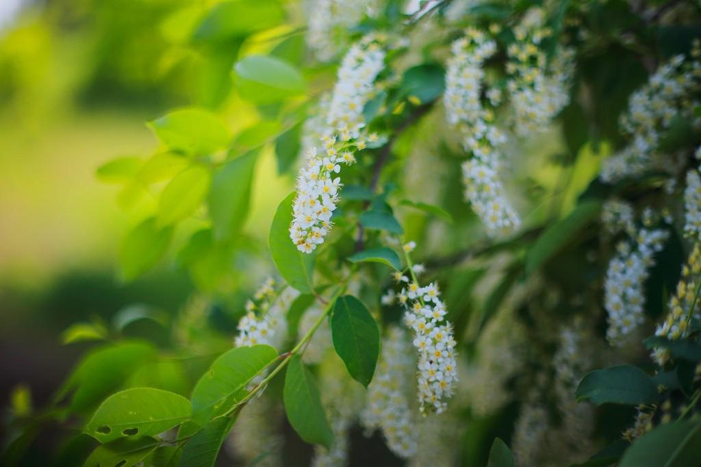 Загородный парк города Владимира летом 09