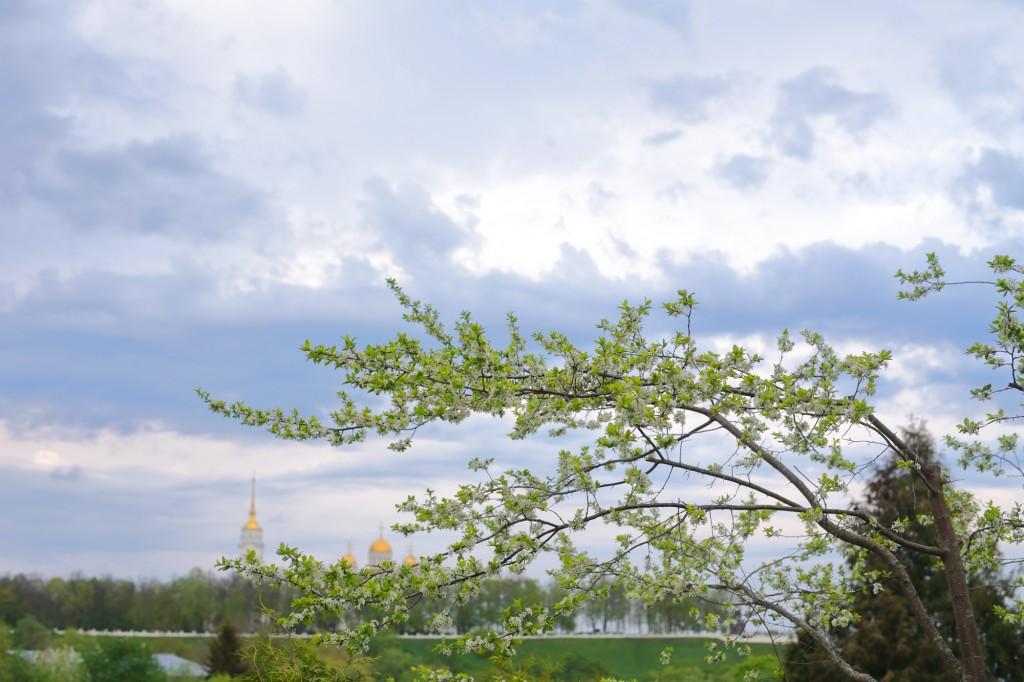 Снова о Патриаршем... лето, город Владимир 05