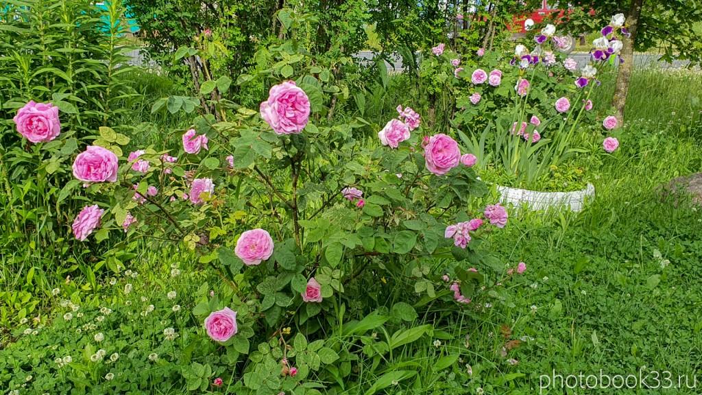 18 Цветы в деревне Тургенево
