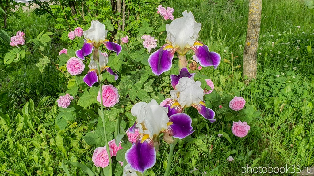 19 Цветы в деревне Тургенево