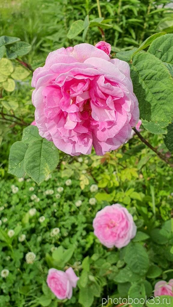 20 Цветы в деревне Тургенево