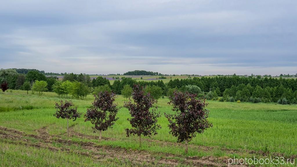 79 Сады в Тургенево возле речки Мокрая