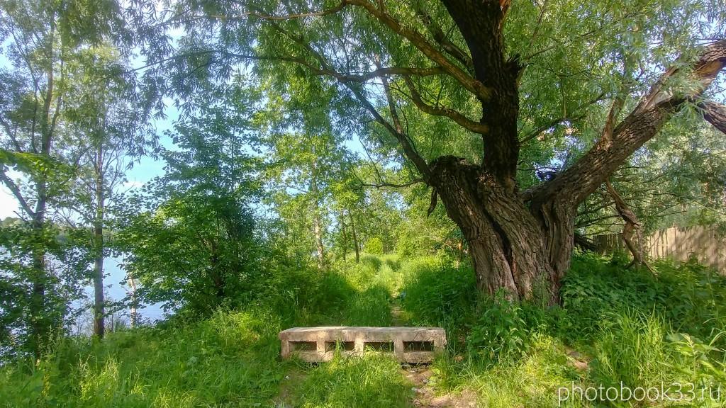 07 Берег Урвановского озера на другой стороне Усада