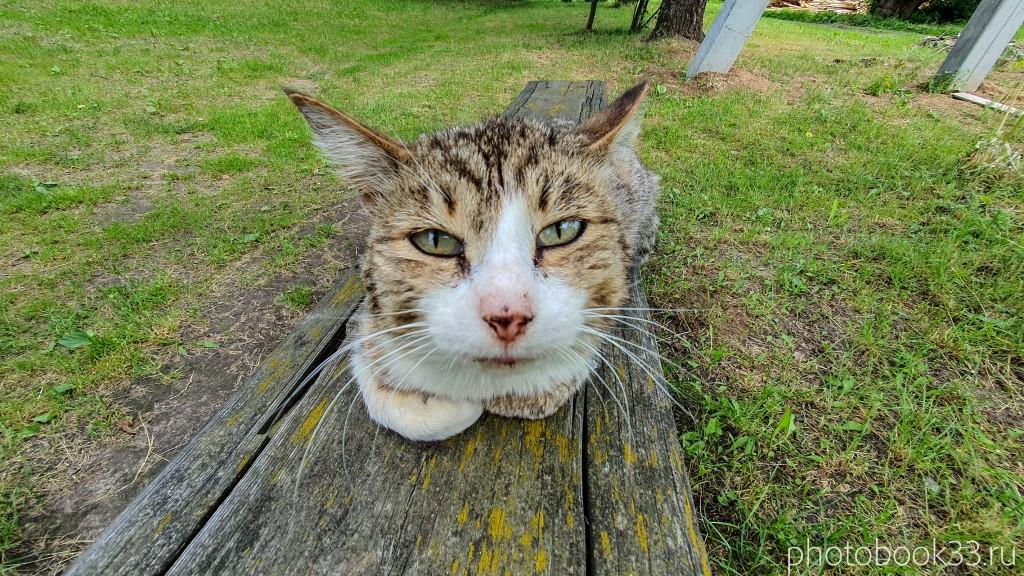 09 Урвановский кот