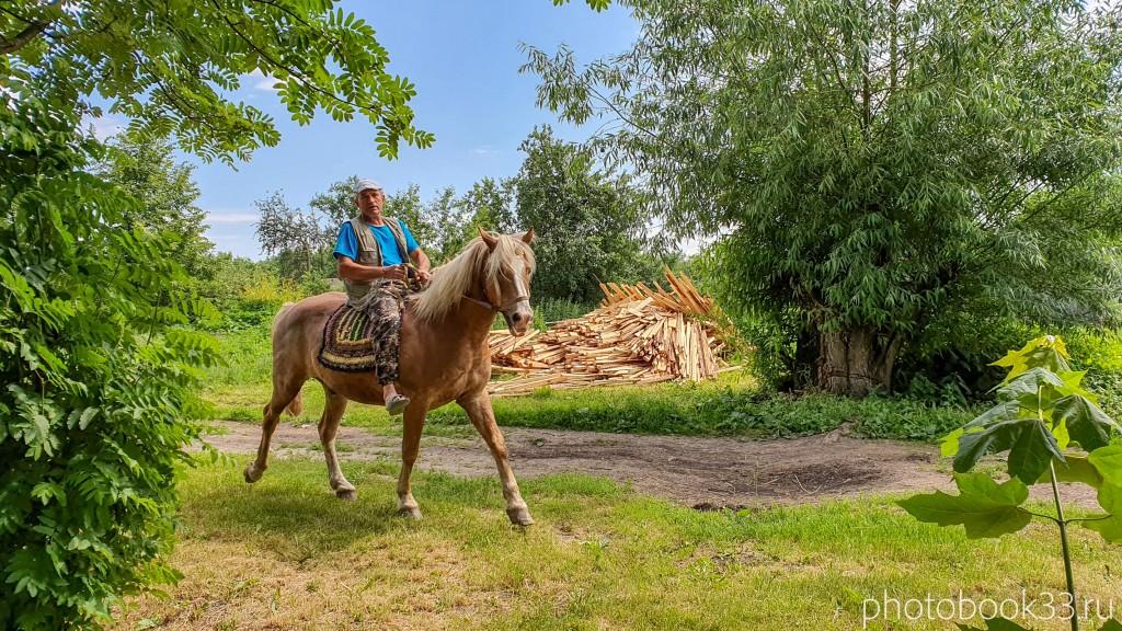 12 Лошадь по кличке Ландыш в Урваново