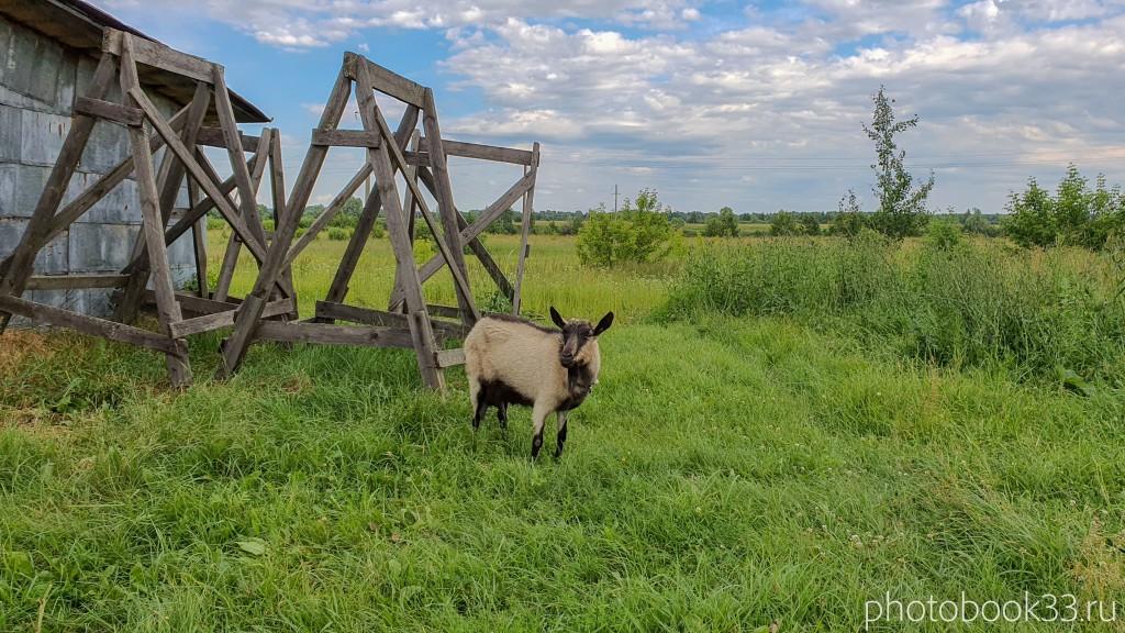 14 Животные в деревне Усад, Меленковский район