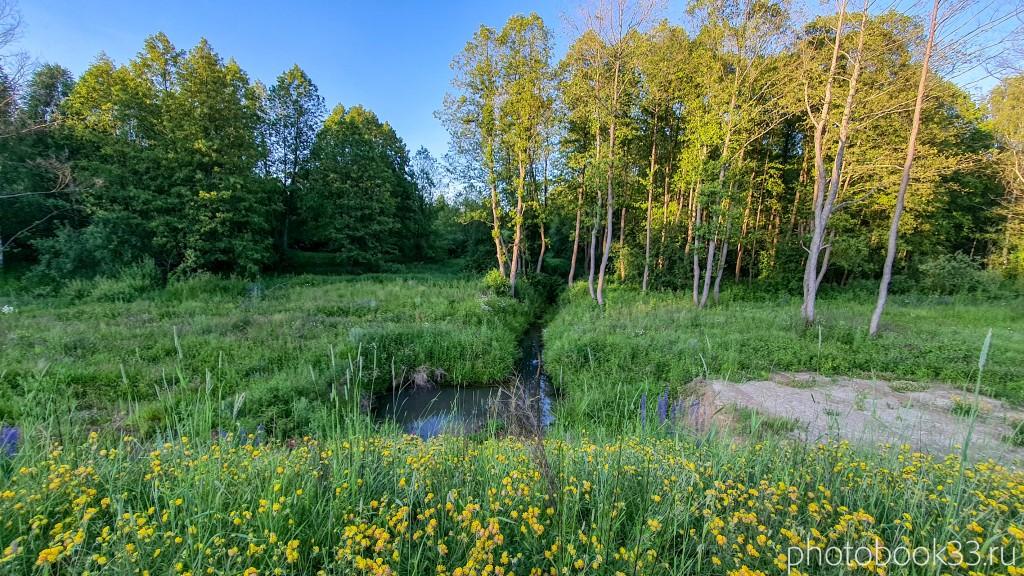 51 Природа Городищи Меленковский район