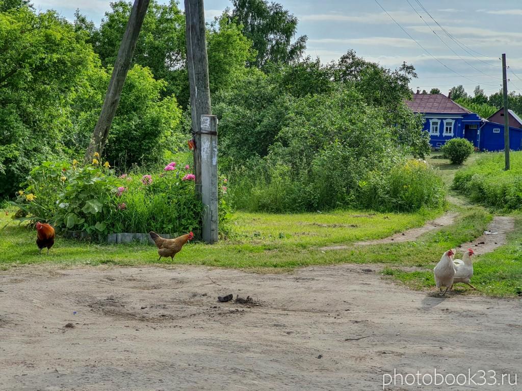 67 Куры в деревне Усад, Меленковский район