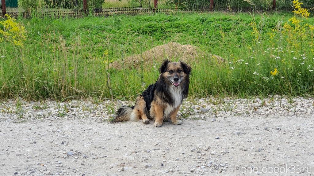 90 Собака в селе Урваново, Меленковский район