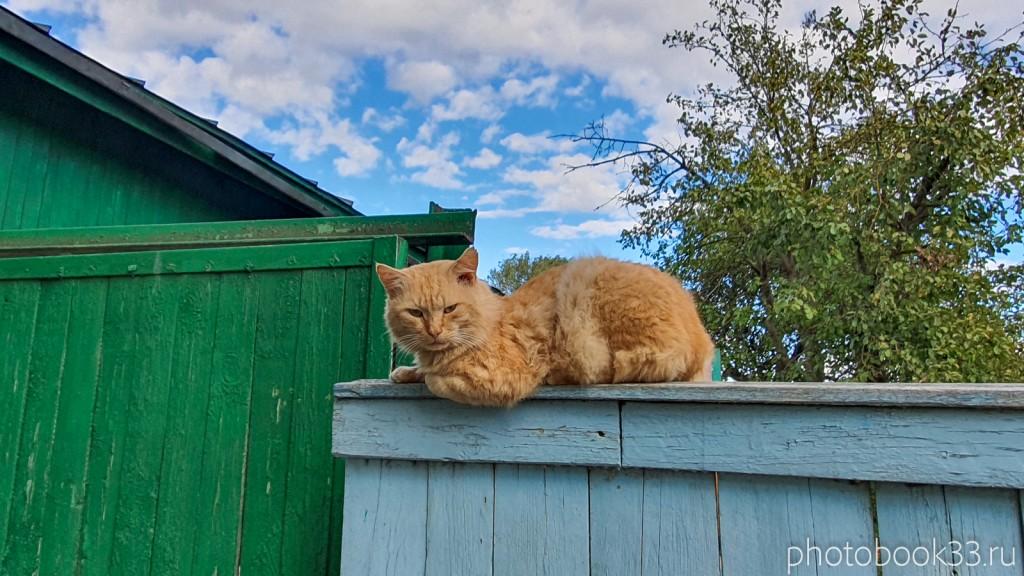 16 Кот в селе Лазарево, Муромский район