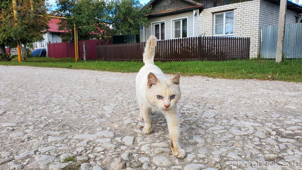 24 Кот в селе Лазарево Муромского района