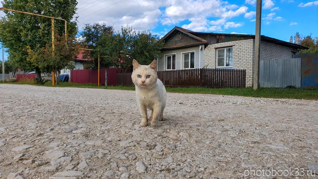 25 Кот в селе Лазарево Муромского района