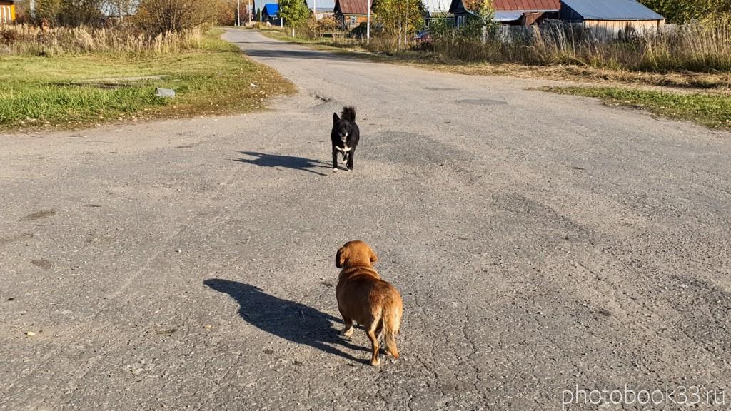 06 Собаки в деревне Кондаково