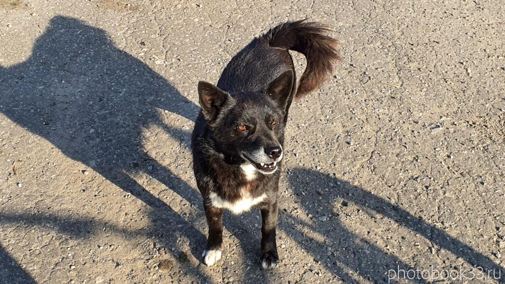 07 Собаки в деревне Кондаково