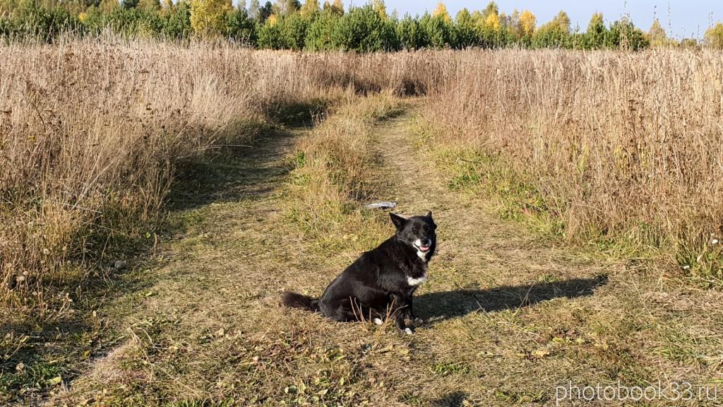08 Собаки в деревне Кондаково