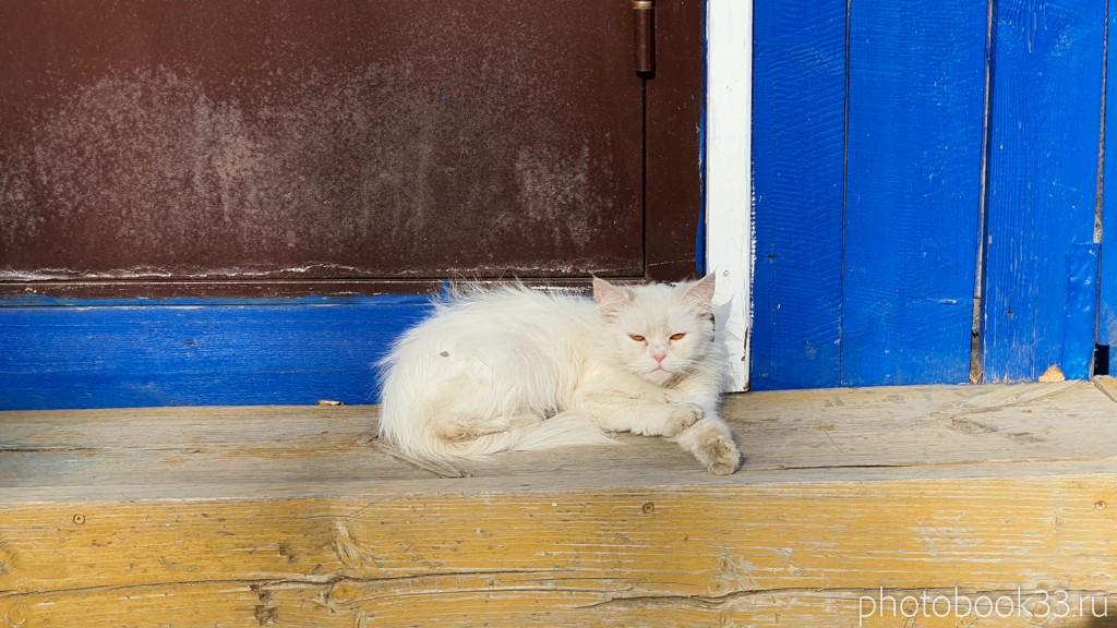 30 Коты в деревне Кондаково, Меленковский район